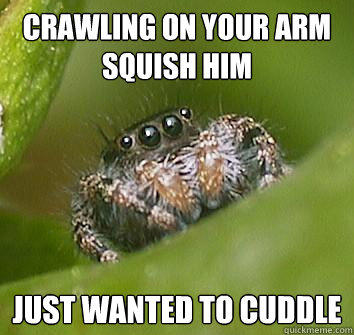 crawling on your arm Squish Him just wanted to cuddle - crawling on your arm Squish Him just wanted to cuddle  Misunderstood Spider