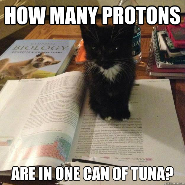 How many protons are in one can of tuna? - How many protons are in one can of tuna?  Procrastination Kitten
