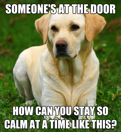 someone's at the door how can you stay so calm at a time like this? - someone's at the door how can you stay so calm at a time like this?  Dog Logic