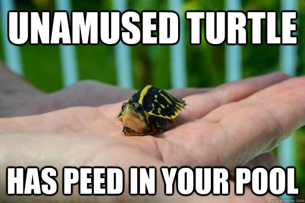 Unamused turtle Has peed in your pool