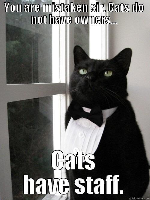 YOU ARE MISTAKEN SIR. CATS DO NOT HAVE OWNERS... CATS HAVE STAFF. One Percent Cat