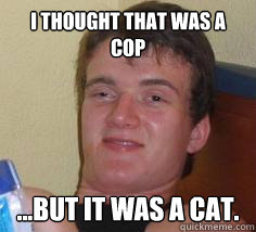 I thought that was a cop ...but it was a cat.