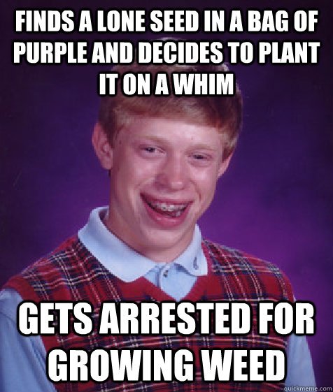 Finds a lone seed in a bag of purple and decides to plant it on a whim gets arrested for growing weed - Finds a lone seed in a bag of purple and decides to plant it on a whim gets arrested for growing weed  Bad Luck Brian
