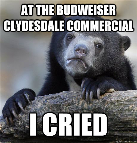 At the budweiser Clydesdale commercial i cried - At the budweiser Clydesdale commercial i cried  Confession Bear