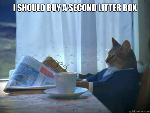 I should buy a second litter box  - I should buy a second litter box   The One Percent Cat