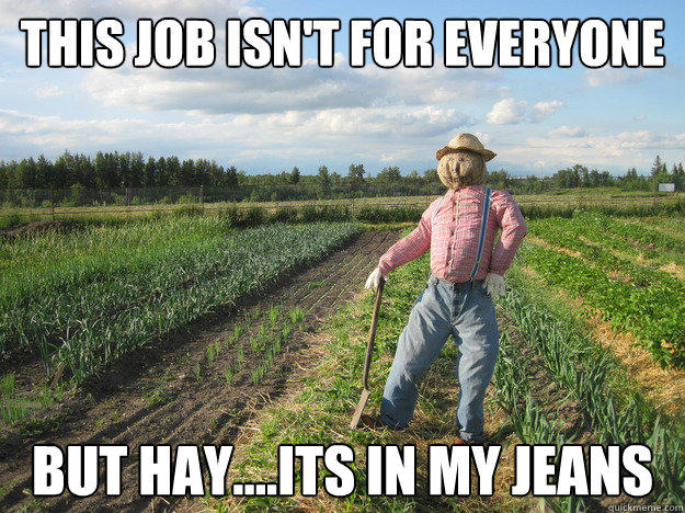 This job isn't for everyone But Hay....its in my jeans  Scarecrow