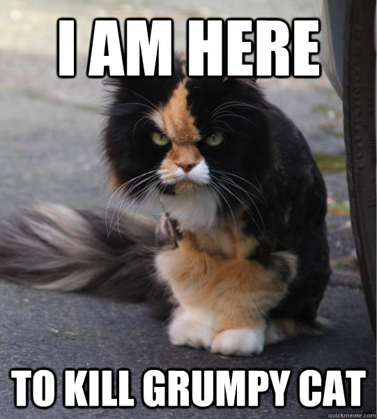 I am here to kill grumpy cat  Evil Cat