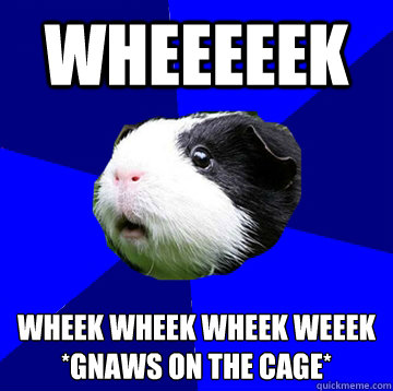 Wheeeeek wheek wheek wheek weeek *gnaws on the cage*