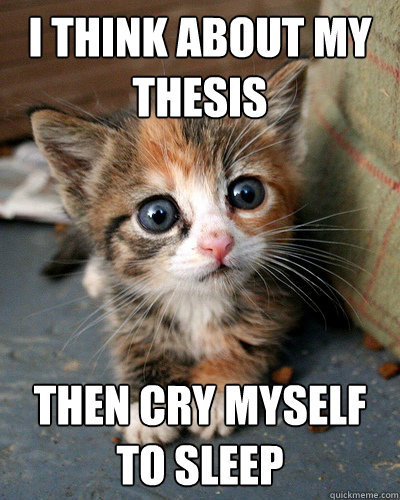 I think about my thesis then cry myself to sleep  Thesis Kitten