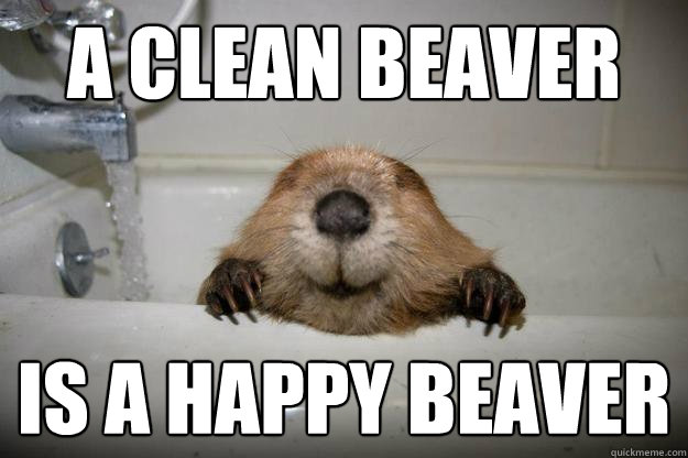 A Clean beaver Is a happy beaver - A Clean beaver Is a happy beaver  Happy Wet Beaver