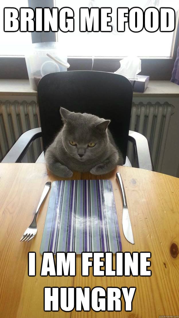 bring me food i am feline hungry - misc
