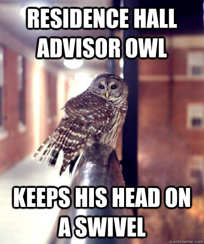 Residence Hall Advisor Owl Keeps his head on a swivel - Residence Hall Advisor Owl Keeps his head on a swivel  ResidenceHallAdvisorOwl