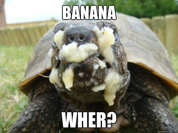 Banana wher?  turtle