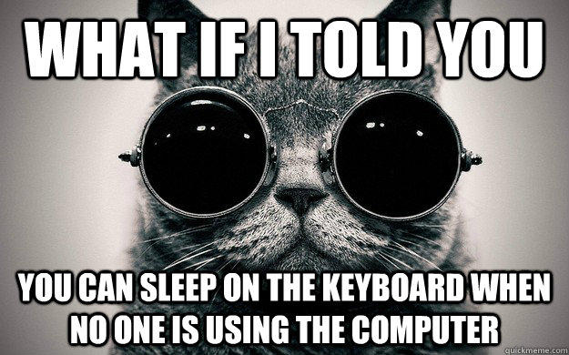 What if i told you You can sleep on the keyboard when no one is using the computer - What if i told you You can sleep on the keyboard when no one is using the computer  Morpheus Cat Facts