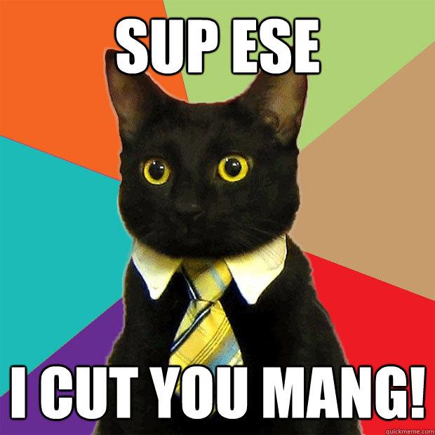 Sup Cat Meme