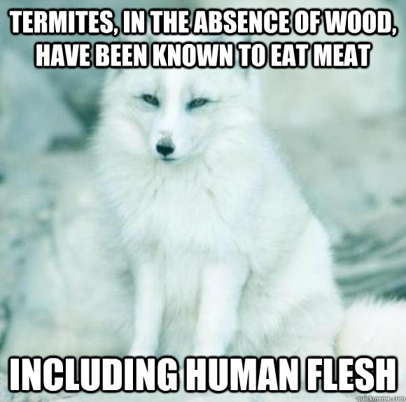 Termites, in the absence of wood, have been known to eat meat including human flesh - Termites, in the absence of wood, have been known to eat meat including human flesh  Faux Facts Fox