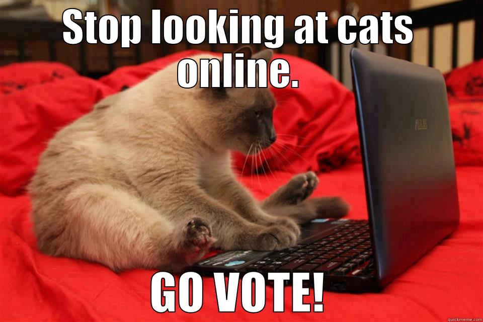 STOP LOOKING AT CATS ONLINE. GO VOTE! Misc