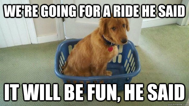 we're going for a ride he said it will be fun, he said - we're going for a ride he said it will be fun, he said  dog viking