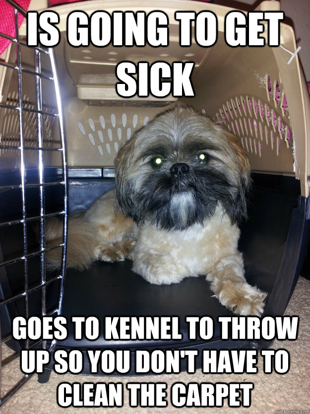Funny clean dog memes - photo#7