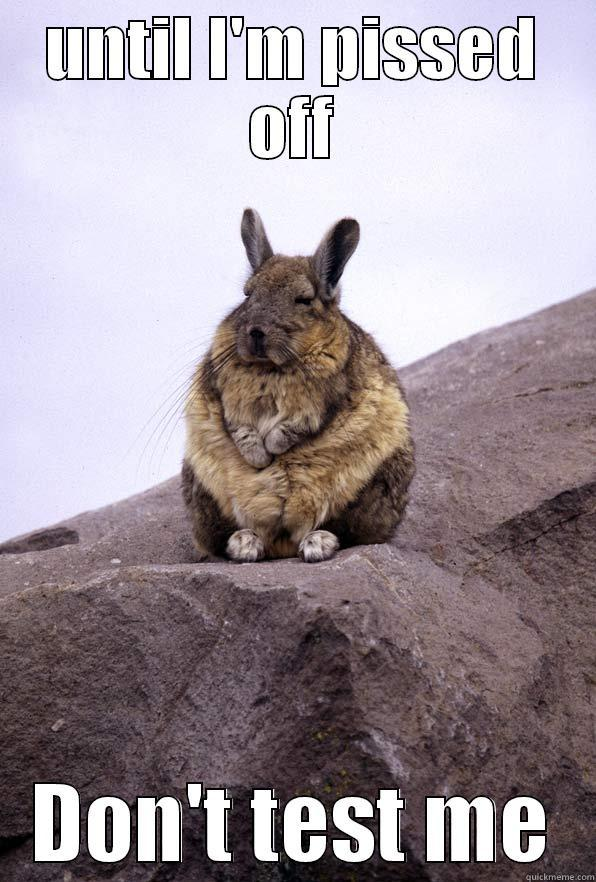 UNTIL I'M PISSED OFF DON'T TEST ME Wise Wondering Viscacha