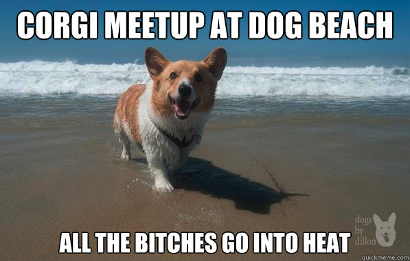 Corgi Meetup at Dog Beach All the bitches go into heat