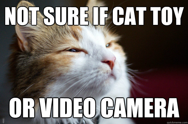 Not sure if cat toy or video camera