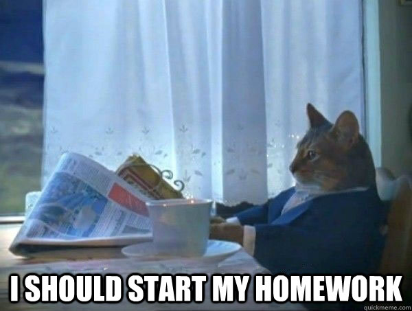 i should start my homework -  i should start my homework  morning realization newspaper cat meme
