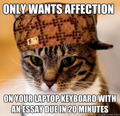 Only wants affection on your laptop keyboard with an essay due in 20 minutes - Only wants affection on your laptop keyboard with an essay due in 20 minutes  Scumbag Cat