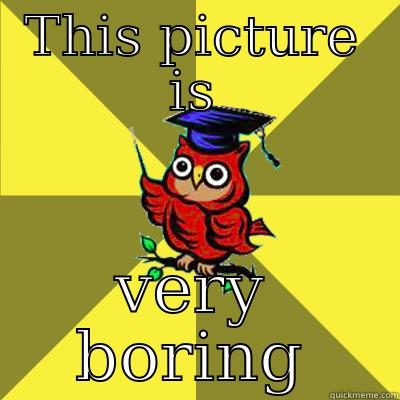THIS PICTURE IS VERY BORING Observational Owl