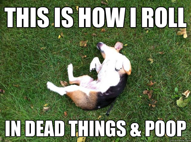 I Has A Hotdog Poop Funny Dog Pictures Dog Memes Puppy