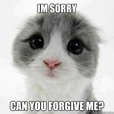 IM SORRY CAN YOU FORGIVE ME?  Cute Cat