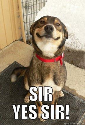 acf60ee5bfa16b6892bf83a2ee525c6b1dece1771083edfe59e99d2199c3c71d good dog greg memes quickmeme