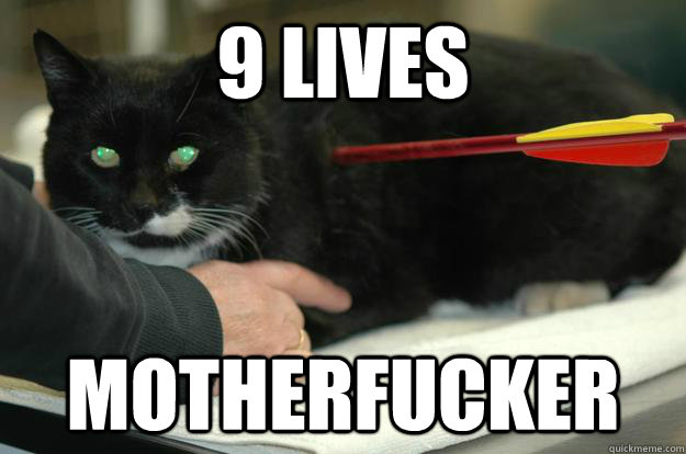 9 Lives Motherfucker  Worlds Toughest Cat