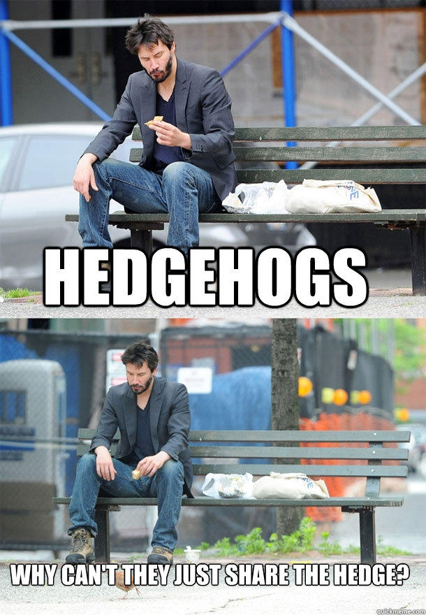 hedgehogs why can't they just share the hedge?  Sad Keanu