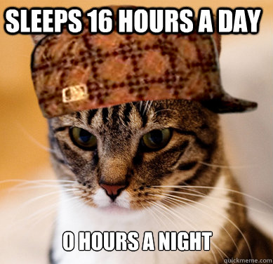 Sleeps 16 hours a day 0 hours a night - Sleeps 16 hours a day 0 hours a night  Scumbag Cat