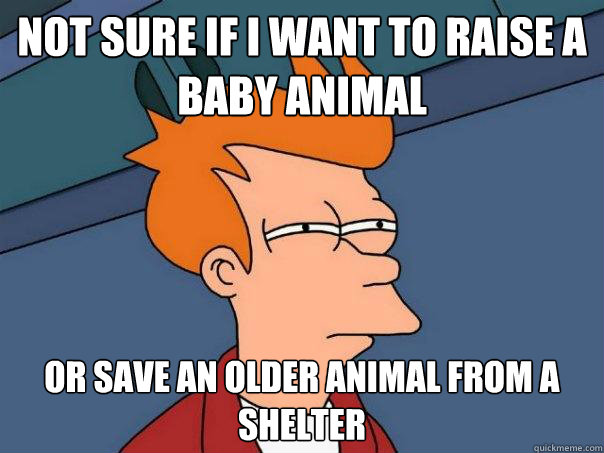 Not sure if I want to raise a baby animal  Or save an older animal from a shelter - Not sure if I want to raise a baby animal  Or save an older animal from a shelter  Futurama Fry