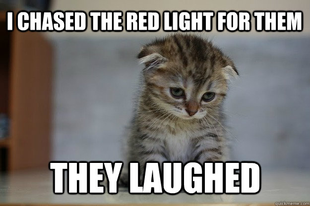 i chased the red light for them they laughed - i chased the red light for them they laughed  Sad Kitten