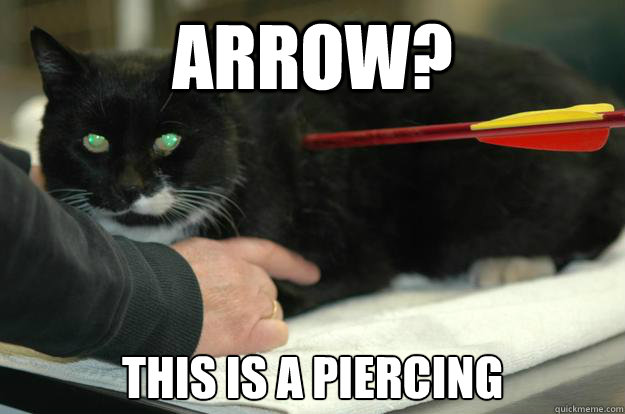 Arrow? This is a piercing - Arrow? This is a piercing  Worlds Toughest Cat