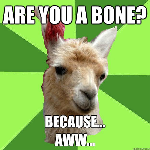 Terrible Pick-up Line Llama SAP cross Bad pickup line panda memes