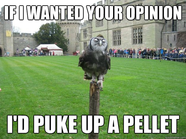if i wanted your opinion i'd puke up a pellet - if i wanted your opinion i'd puke up a pellet  Pompous Owl
