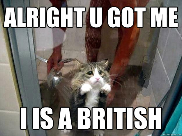 Alright u got me I is a british  Shower kitty