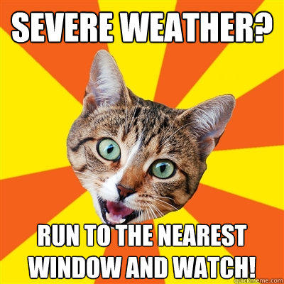 Severe weather? Run to the nearest window and watch!  Bad Advice Cat