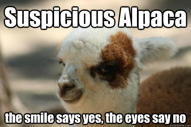 Suspicious Alpaca the smile says yes, the eyes say no  Suspicious Alpaca