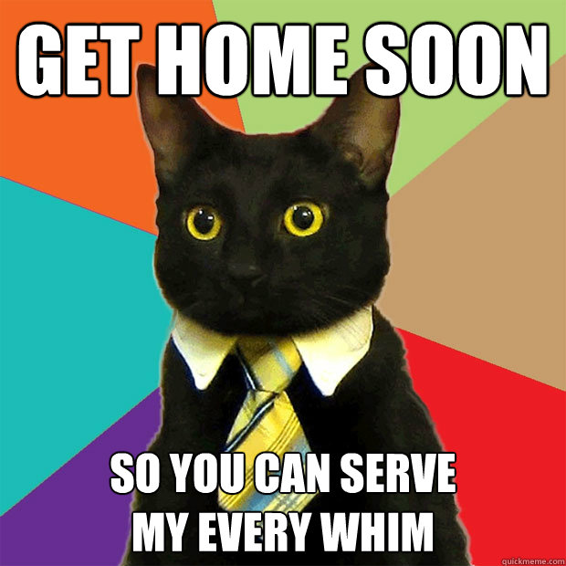 af96d9b8690205fb2993ee8a6cb48bdfe0321ef93ed8a95faf5bc81491269cb6 get home soon so you can serve my every whim business cat,Get Home Meme