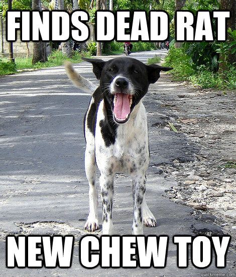 finds dead rat new chew toy