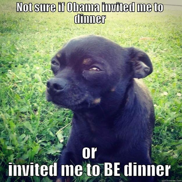 NOT SURE IF OBAMA INVITED ME TO DINNER OR INVITED ME TO BE DINNER Skeptical Dog