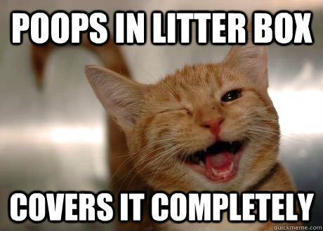 Poops in litter box covers it completely