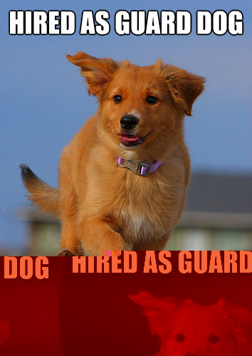 Hired as guard dog by chuck norris - Hired as guard dog by chuck norris  Ridiculously Photogenic Puppy