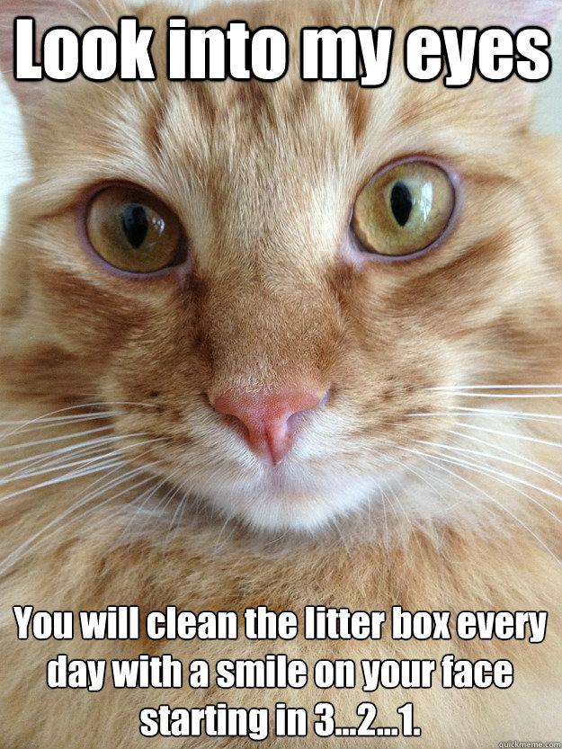 Funny Memes Clean Cats : Hypno cat memes quickmeme