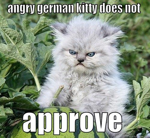 ANGRY GERMAN KITTY DOES NOT APPROVE German Kitty